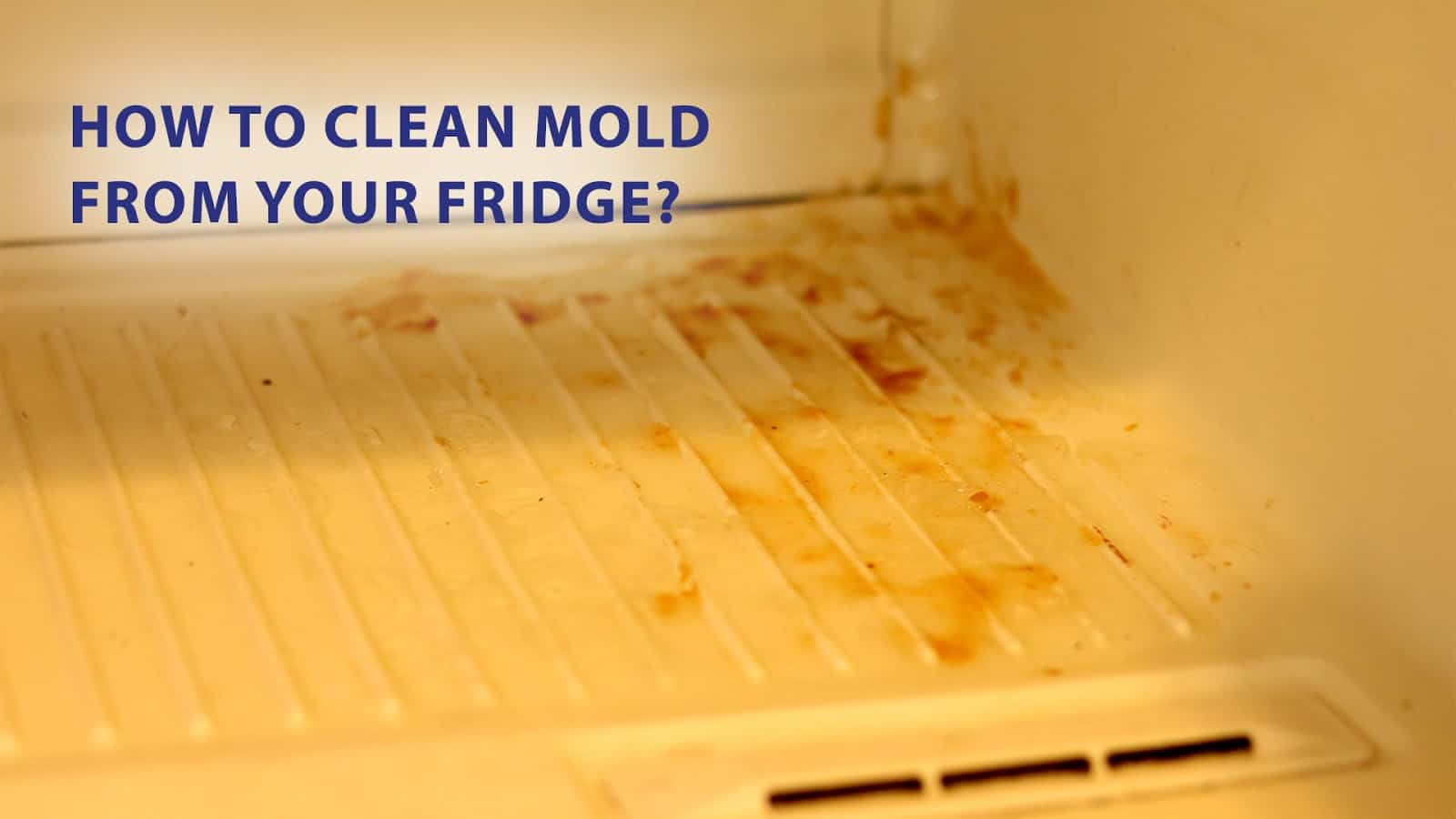 clean mold from fridge